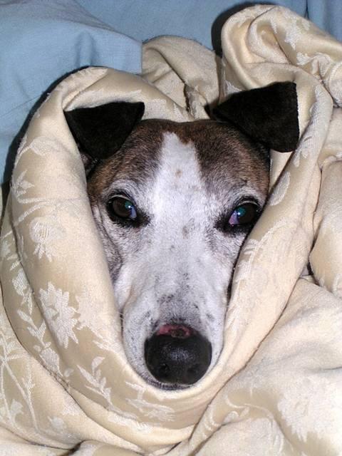 cachorro inverno frio