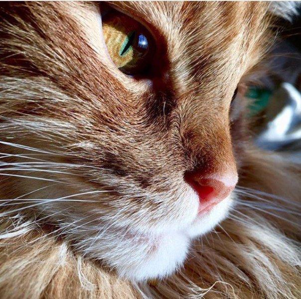 close gato