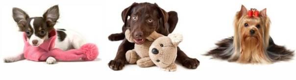 CONVITE_TREND_LOVER_FASHION_DOG