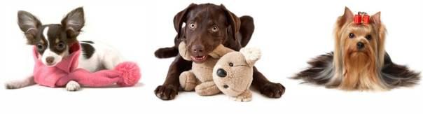 CONVITE_TREND_LOVER_FASHION_DOG_1