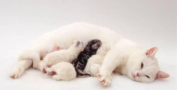 gata amamentando filhotes warren
