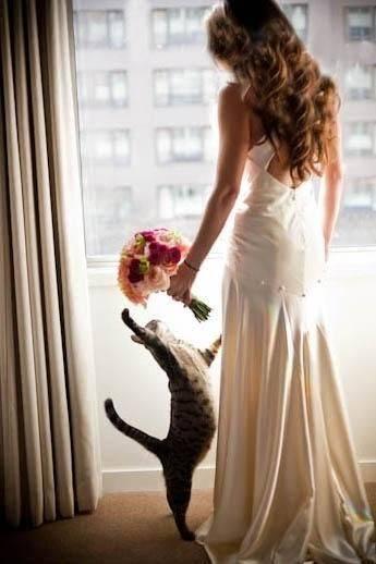 gata e noiva