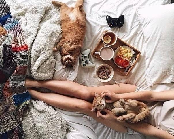 gatos na cama 3