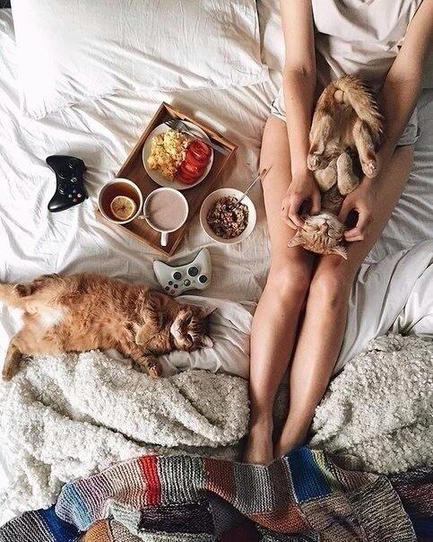 gatos na cama