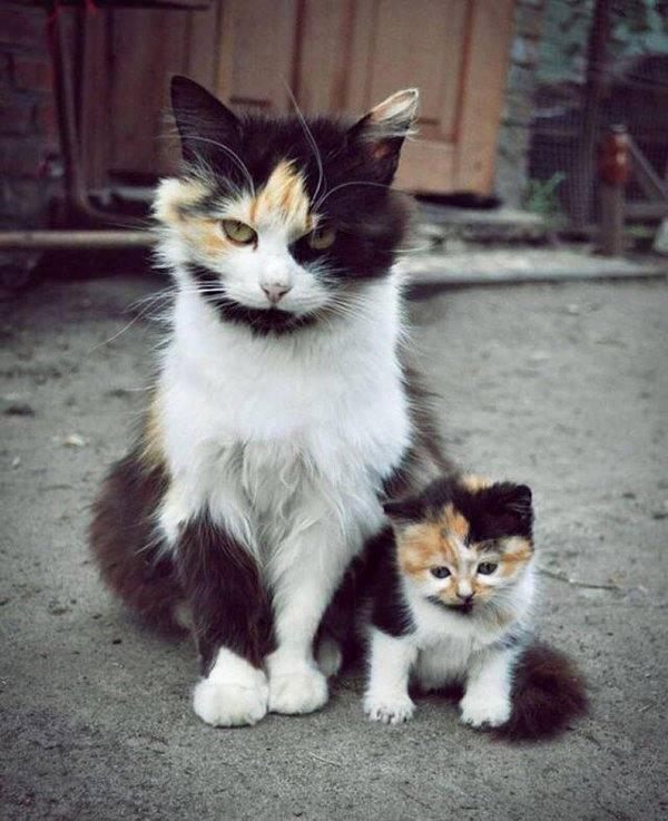 mãe e filha.jpg
