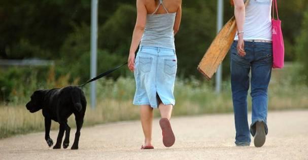 mulher cachorro passeio caminhada