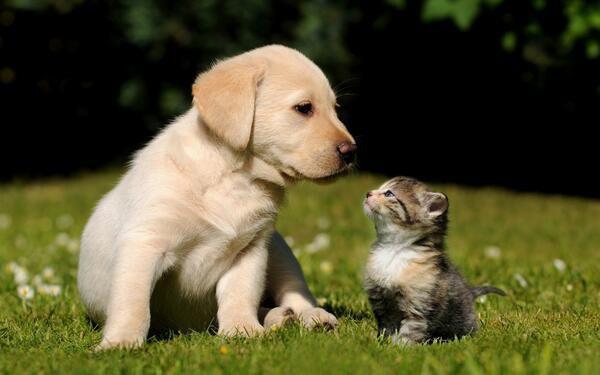filhote gato e cachorro