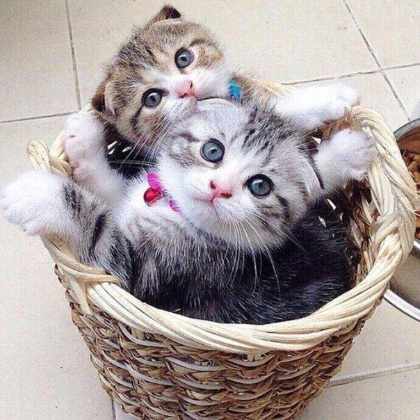 filhotes de gato