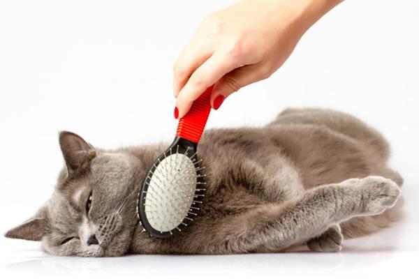 gato escova.jpg