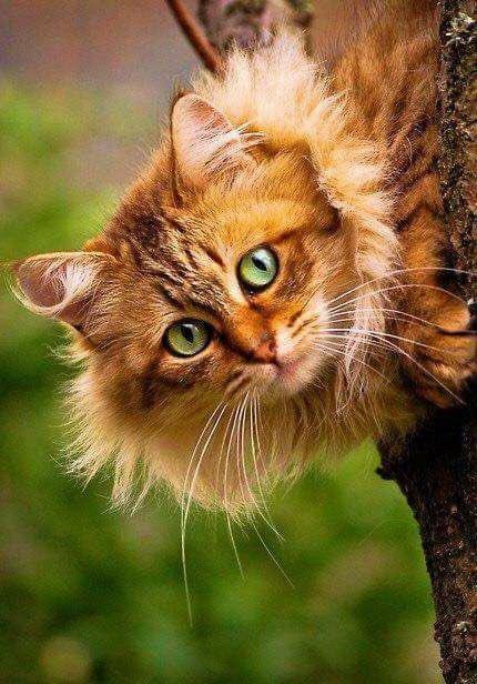 gato jardim