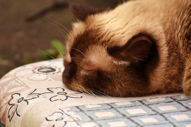 gato na cama