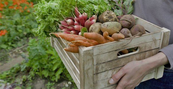 legume organicos raízes