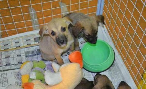 oab-sto-andre- cachorros adoção