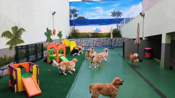 recreação cachorros