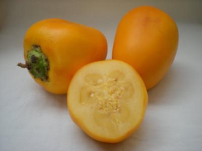 tudosobreplantas maná cubiu