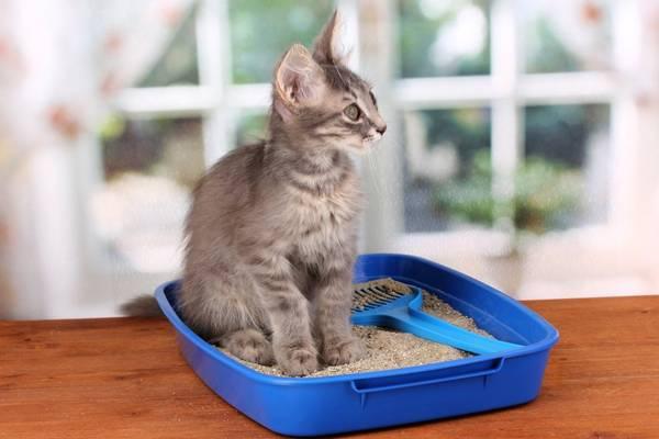 usar-a-caixa-de-areia pet love