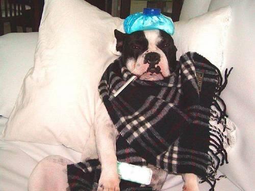 cachorrinho doente J felias
