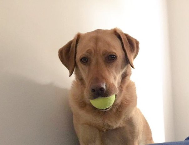 cachorro com bolinha brinquedo