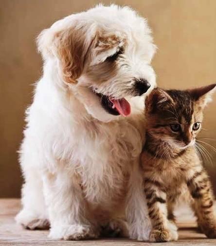 cachorro e gato
