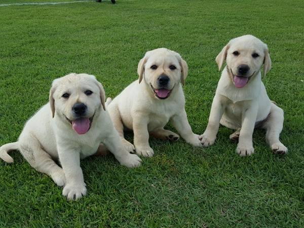 cachorros filhotess