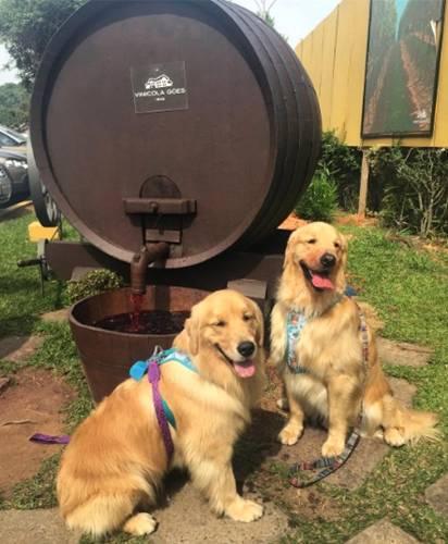 cachorros vinicola