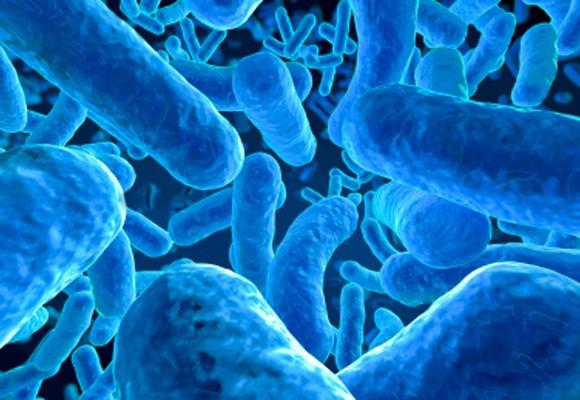elprobiotico-img5-580x400
