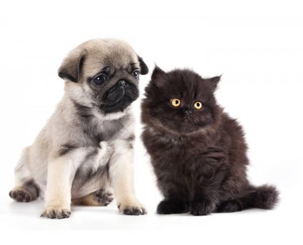 filhotes cachorro gato
