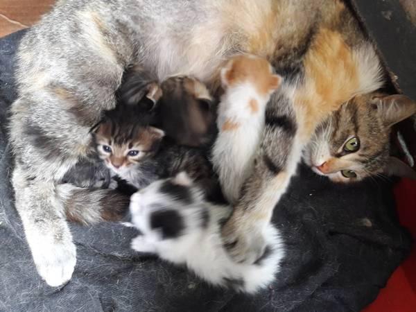 gata e filhotinhos gato