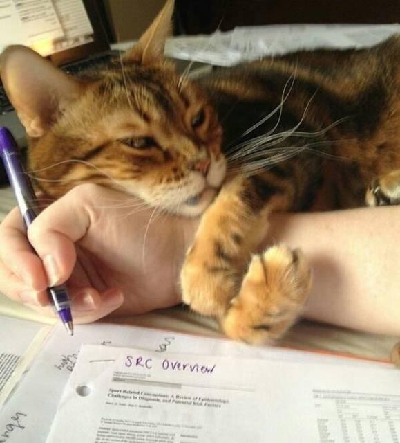 gato braço