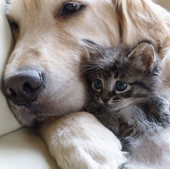gato e cachorro amigos