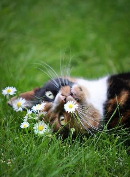 gato gato flores jardim
