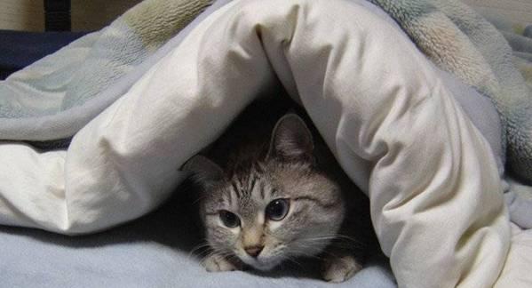gato na cama3