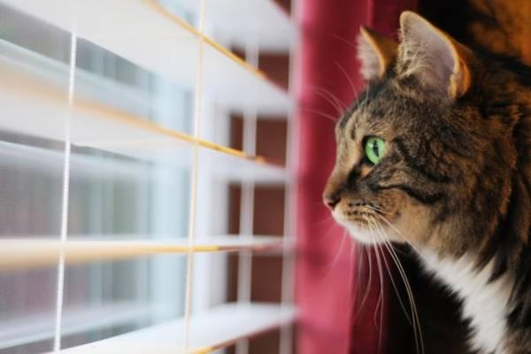 gato na janela.jpg
