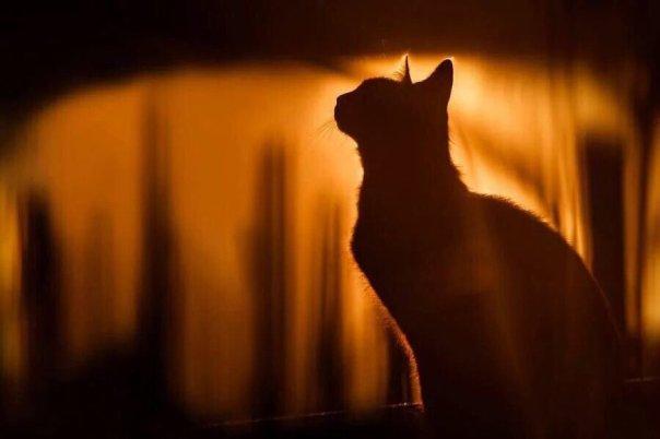 gato silhueta noite