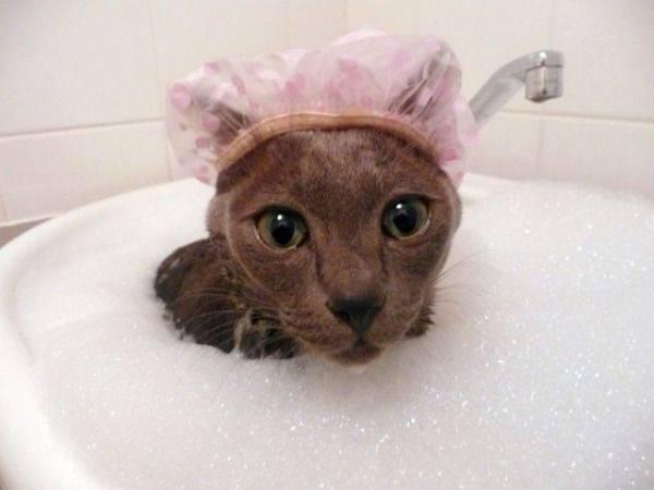 gato tomando banho pinterest