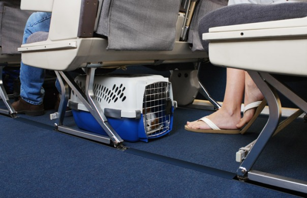 gato travelling-with-pets-flying-with-pets