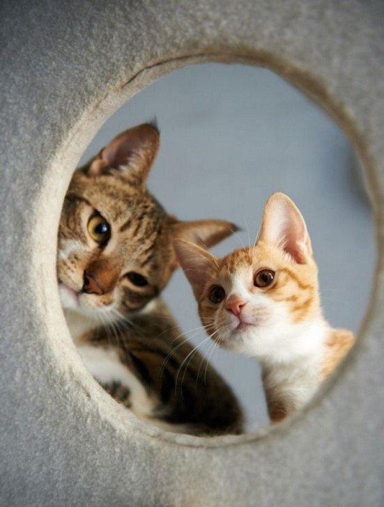 gatos curiosos.jpg