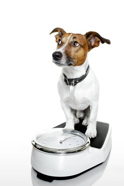 shutterstock cachorro balança