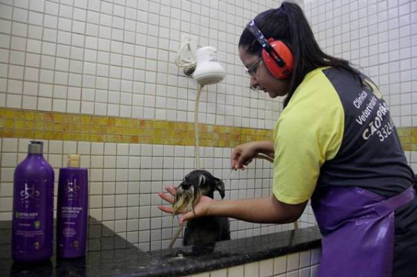 Cães e gatos ganham hidratação de pelo durante mês de agosto aniversário de Barretos 2