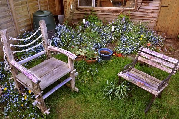 jardim quintal cadeira planta