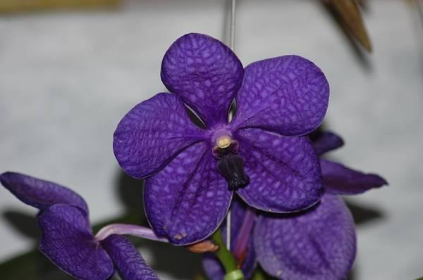 orquideas2508