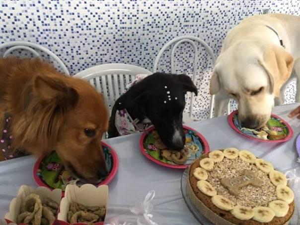 Pet_ Alimentação