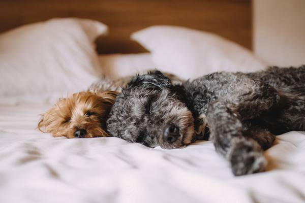 pets_frio2 cachorros dormindo cama