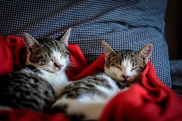 pets_frio_ gatos dormindo