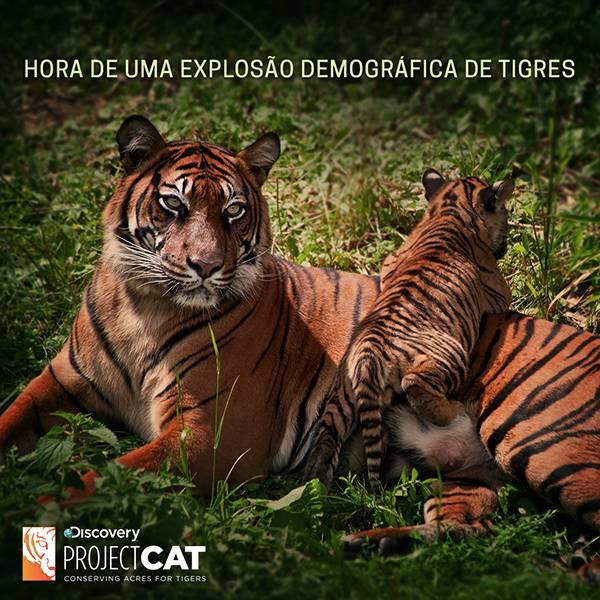 tigres 2