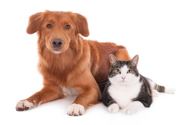 cachorro e gato adoção.jpg