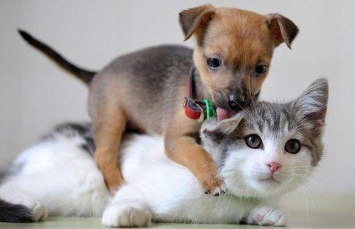 filhotes cachorro e gato