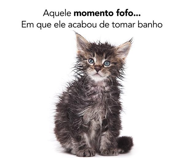 gato banho molhado