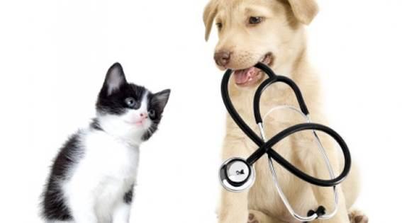 gato cachorro estetoscopio.png