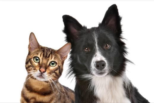 gato e cachorro 2